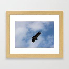 Vulture flight Framed Art Print