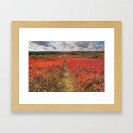 Autumn Huckleberry Trail Framed Art Print