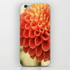 Red Petal Queen iPhone & iPod Skin