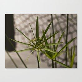 Starburst of Green Canvas Print