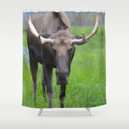 Bullwinkle Bull Shower Curtain