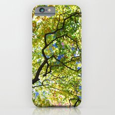 Arboretum Tree iPhone 6 Slim Case