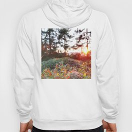 Evening glow in the forest Hoody