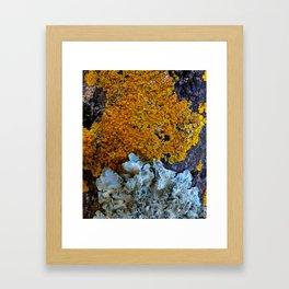 Tree Bark Pattern # 6 with Orange and Blue Lichen Framed Art Print