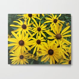 Golden Rudbeckia flowers in the garden Metal Print