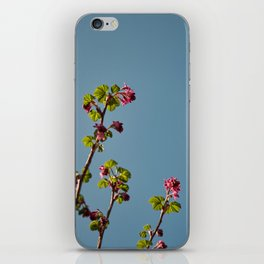 Ribes Plant iPhone Skin