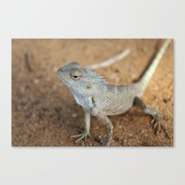 Look Me In the Eye-  Posing Lizard in Sri Lanka Canvas Print