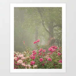 Blooms In Fog I Art Print
