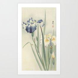 Irises - Ohara Koson (1900 - 1936) Art Print