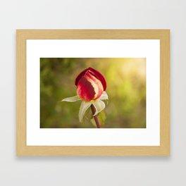 The Rose Framed Art Print