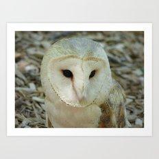 owl 2016 Art Print