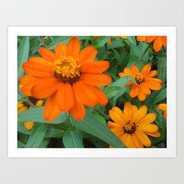 Orange Echinacea Sombrero Coneflowers Art Print