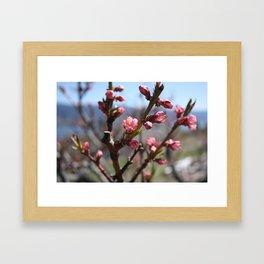 peach blossom Framed Art Print