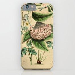 Flower hoya variegata aquilegia kanaoriensis14 iPhone Case