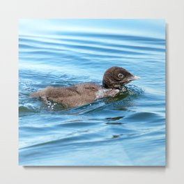 Baby loon solo swim Metal Print