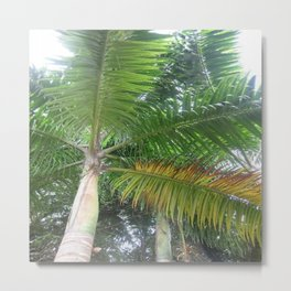 See Life From New Angles Metal Print