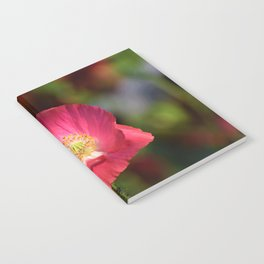 Pink Poppy in the Sunshine Photograph Notebook
