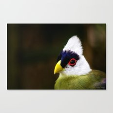 White Crested Turaco Canvas Print