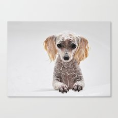 Bath Time for Rylie  (poodle) Canvas Print