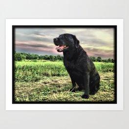 Labrador at Dusk Art Print