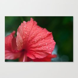 Droplets 2 - (Limited to 10 Prints) Canvas Print