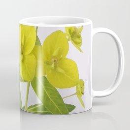 Euphorbia Cornigera Coffee Mug