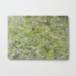 Bee in the forget me nots Metal Print