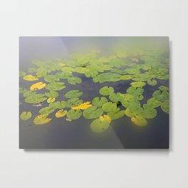 garden pond IV Metal Print