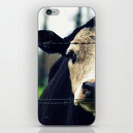 Moo Cow I iPhone Skin