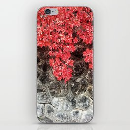 Pink red ivy leaves autumn stone wall iPhone Skin