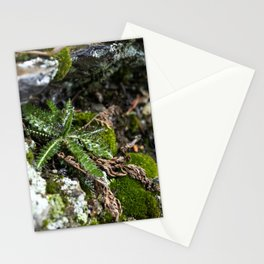 Small Fern Stationery Cards