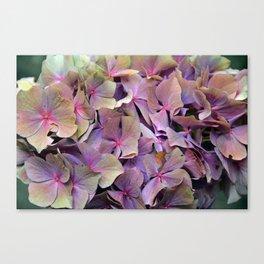 Artistic Autumnal wilt Hydrangea (water colour effect) Canvas Print