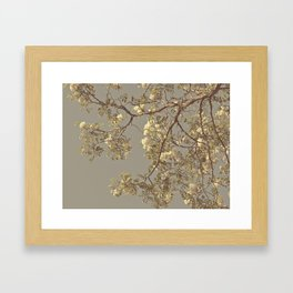 Under the Honey Locust Tree Framed Art Print