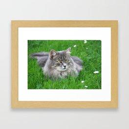 Persian cat in the grass Framed Art Print