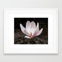 magnolia Framed Art Prints featuring Magnolia by Guna Andersone & Mario Raats - G&M Studi