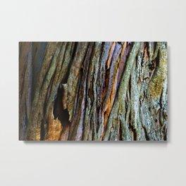 Eucalyptus Tree Bark and Wood Texture 19 Metal Print