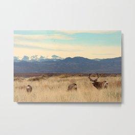 Sharing The Mountains Metal Print