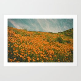 California Poppies 016 Art Print