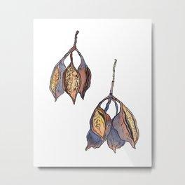 Kurrajong seed pods Metal Print