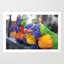 Australian Rainbow Lorikeets Art Print