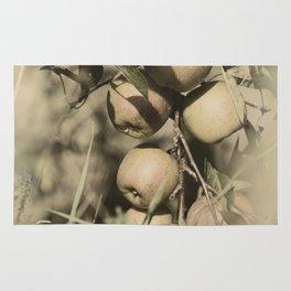 Fresh apples on the tree in vintage look Rug