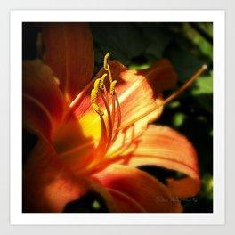 Orange Lilly  Art Print