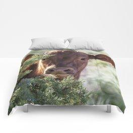Shy Calf Comforters