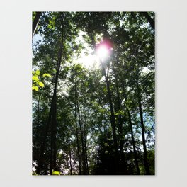 Afternoon Sun • Northpointe Fitness Park & Nature Trails • Marysville, WA Canvas Print
