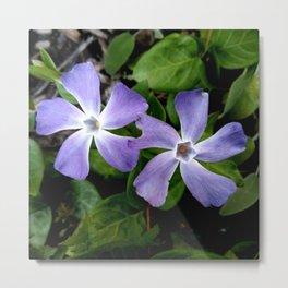 Purple flower 13 Metal Print