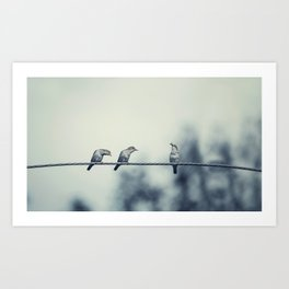Three birds on wire, one of the bird has a food Art Print