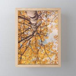Beneath the Autumn Birch Tree Framed Mini Art Print