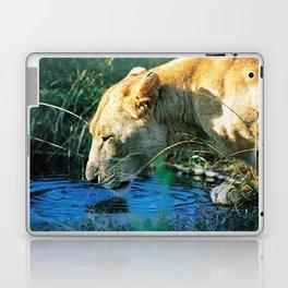 Lion Drinking Laptop & iPad Skin