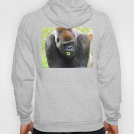 Male Silverback Lowland Gorilla with Smirk and Lettuce in Mouth Hoody