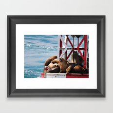 sea lion buoy Framed Art Print